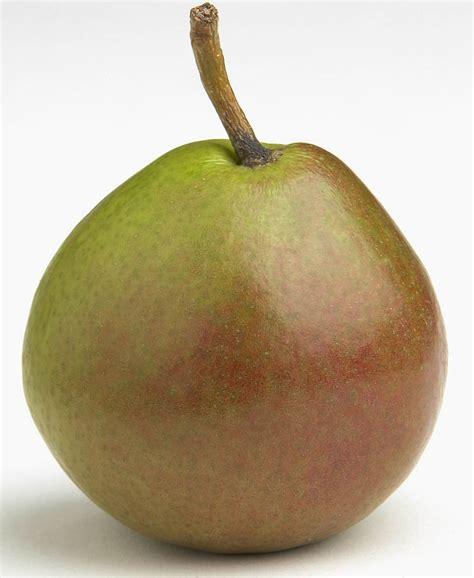 Fresh pear bread recipe jpg 1500x1831